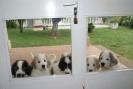 Cachorros de dos meses