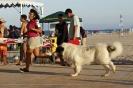 I Encontre Mostiner de la Comunitat Valenciana 2014_18