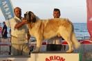 I Encontre Mostiner de la Comunitat Valenciana 2014_26