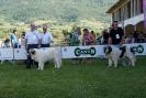 X TOPAKETA 2014 Alsasua (Navarra)_12