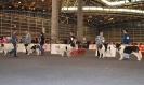 XI Concurso Monográfico de la Comunidad Valenciana_2