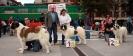 XI Topaketa: Concurso Monográfico del Mastín del Pirineo_10