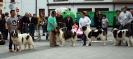 XI Topaketa: Concurso Monográfico del Mastín del Pirineo_17