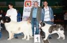 XI Topaketa: Concurso Monográfico del Mastín del Pirineo_1