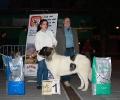 XI Topaketa: Concurso Monográfico del Mastín del Pirineo_24