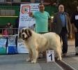 XI Topaketa: Concurso Monográfico del Mastín del Pirineo_30