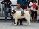 XI Topaketa: Concurso Monográfico del Mastín del Pirineo_32