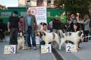 XI Topaketa: Concurso Monográfico del Mastín del Pirineo_3
