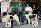 XI Topaketa: Concurso Monográfico del Mastín del Pirineo_5