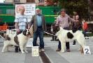 XI Topaketa: Concurso Monográfico del Mastín del Pirineo_8