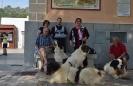 12-Octubre-2016 Día Internacional del Mastín del Pirineo_55