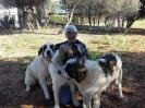 12-Octubre-2016 Día Internacional del Mastín del Pirineo_61