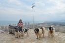 12-Octubre-2016 Día Internacional del Mastín del Pirineo_81