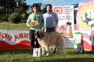 I Concurso Monográfico de Guadalaviar. Club del Mastín del Pirineo de España_8
